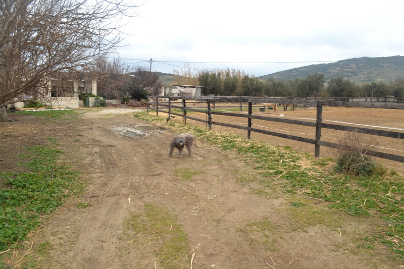 skyros-farm-dog